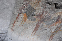 Indian Pictographs - Seminole Canyon 0009