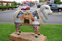 Sheep - San Angelo