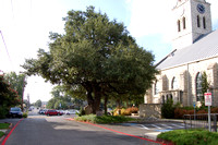 Church Oak 0001